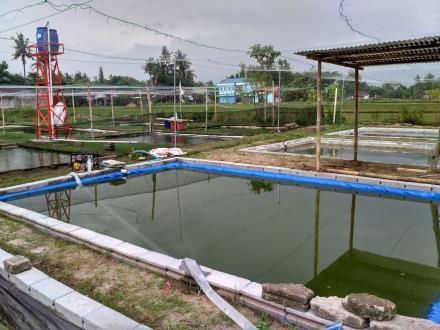 Geliat Kelompok Budidaya Ikan Baru Mina Dompon Sejahtera Kadisoro